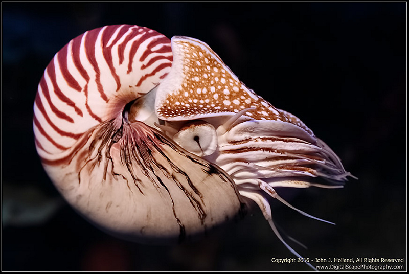 the chambered nautilus in my life The chambered nautilus questions and answers - discover the enotescom community of teachers, mentors and students just like you that can answer any question you might have on the chambered nautilus.